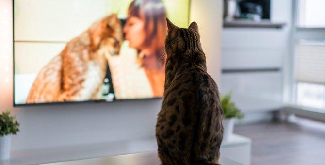 猫が出るテレビ番組 オススメの4選!