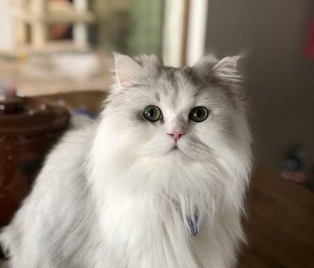 「抜け毛」の多い猫の種類3つとオススメ対策