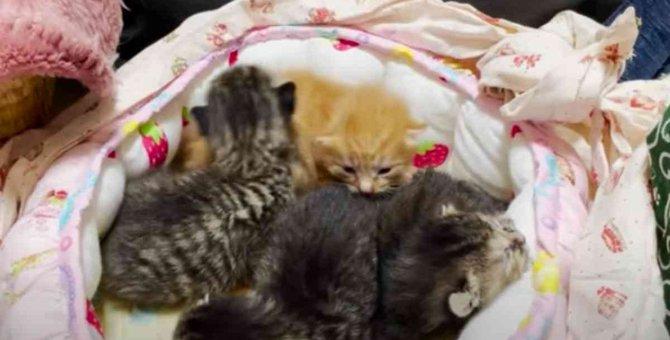 生後半年でママになった猫…7匹の子猫と共に緊急保護!