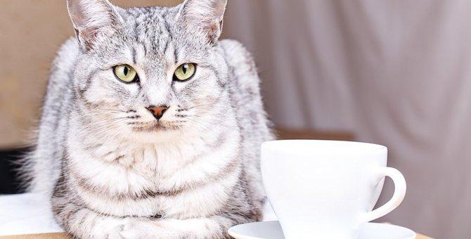 猫のマグカップおすすめ人気ランキング10選!Amazon、楽天以外で買えるお店も紹介