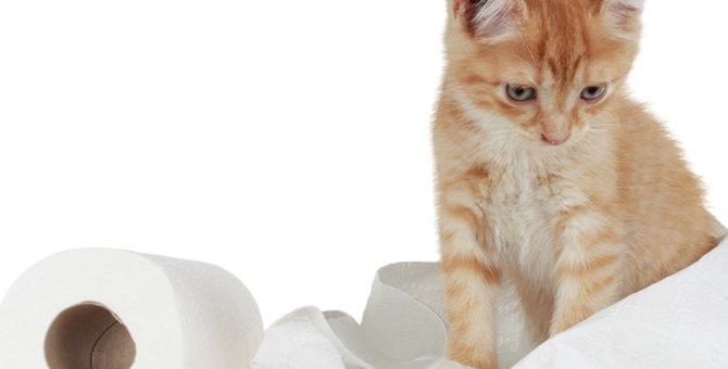 子猫のトイレのしつけ方法