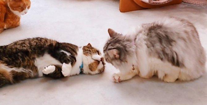 大好きな猫さんと鼻チュー♪幸せそうなレオンさん