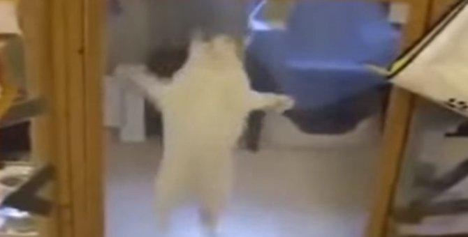 私を連れてって!保護施設にいる猫ちゃんが里親候補に猛烈アピール!
