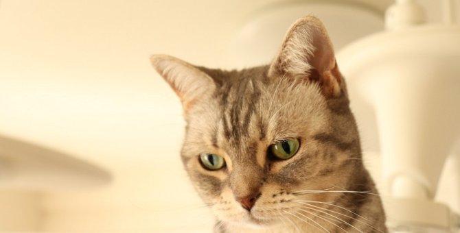 猫の早死を招くかもしれない3つの飼い方