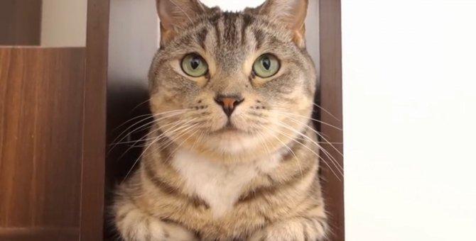 キャットタワーにジャストフィット!隙間にハマる猫♪