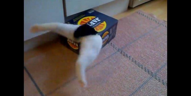 「そこにダンボールがあるから」難易度の高い箱に挑戦する猫ちゃん!
