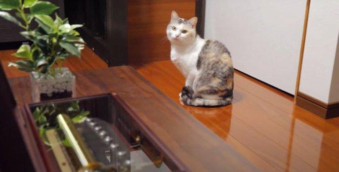 オルゴールにウットリ♡音色の違いが分かる猫?