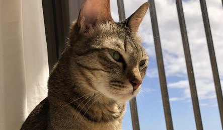 猫は留守番中ひとりぼっちで寂しいと思っているの?