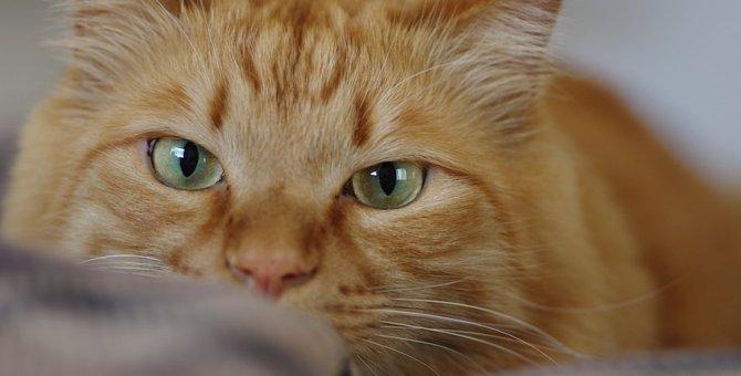 猫の額にMマークがあるのはどうして?
