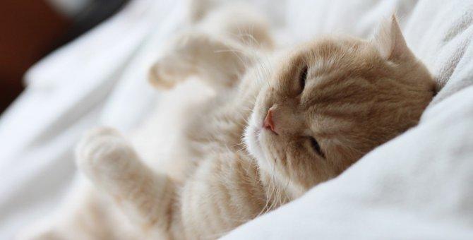 猫にでべそはある?手術の費用と考えられる病気