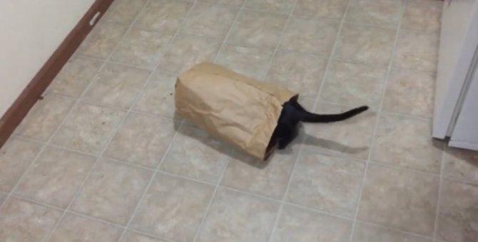 猫の本能を利用した画期的なトラップ!