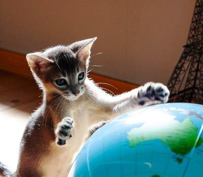 猫がスキップ?!『楽しい!』と思っているときの仕草4つ