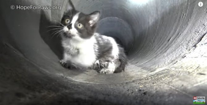 映画さながら!マンホールの下に広がる下水道管で子猫を追跡