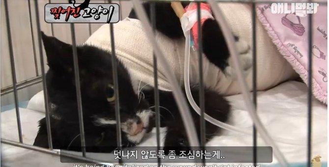 背中に複数の引き裂かれたようなひどい怪我を負った猫