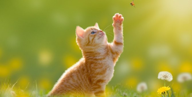 猫が『狩猟本能』を発揮しているときの行動3つ