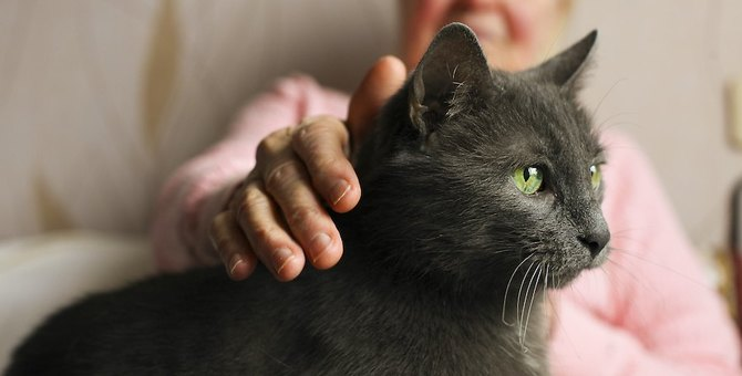 猫の老化を早めてしまうNG食生活4つ