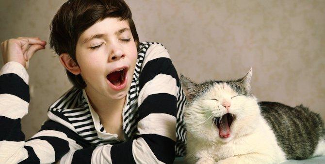 人のあくびは猫にうつる?