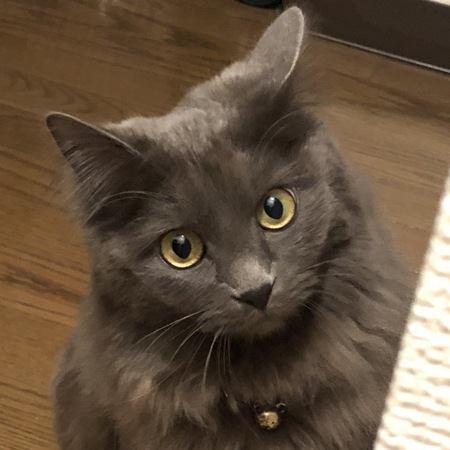 猫が心細かったときに見せる飼い主への行動5つ