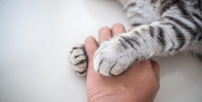 猫が『飼い主から離れない』時の心理3選