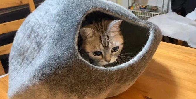 猫ちゃんの誕生日♡プレゼントはなーんだ?