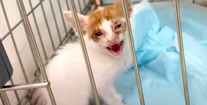ロシア人の留学生が子猫を緊急保護…心ある行動が命を繋ぐ!