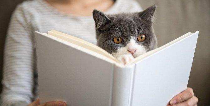 『吾輩は人間だニャ!』と思っている猫がする仕草5つ