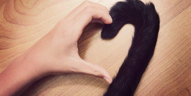 猫が飼い主に尻尾をぶつけてくる時の心理
