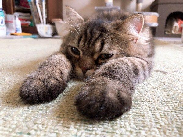 猫が『愛情不足』な時にする行動8つ