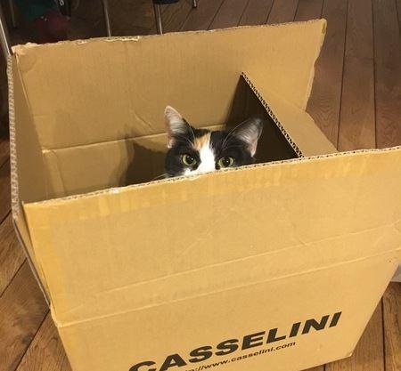 猫が家の中で隠れる時の心理5つ