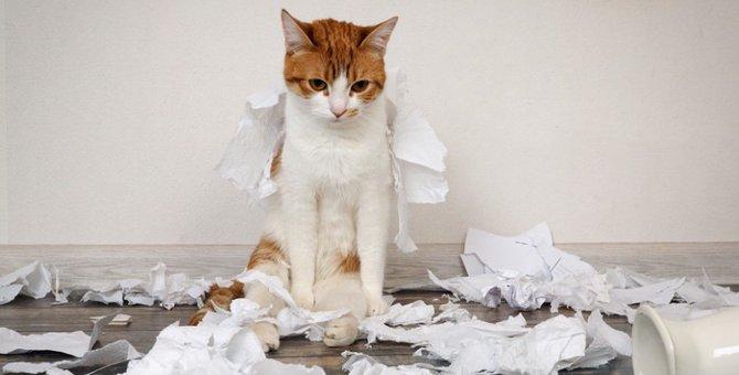 猫がティッシュにイタズラをする理由と対策