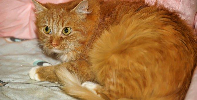 猫を撫でようとしたら逃げられた…理由5つ。ケガや病気の可能性も