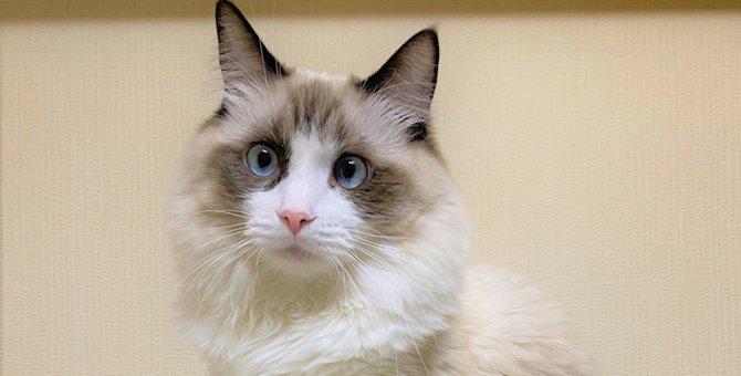 噛みつき独り寝する愛猫の驚きの気持ちとは|LAYLAのペットリーディング