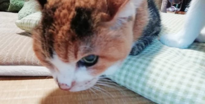 21年前、子猫を連れて現れた野良猫…賑やかな家庭で幸せに♡
