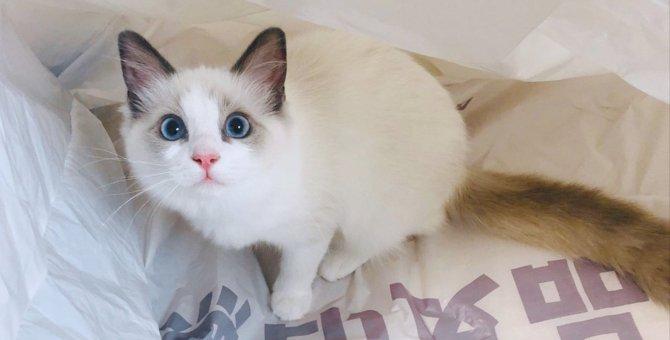 猫に愛される飼い主の7つの共通点