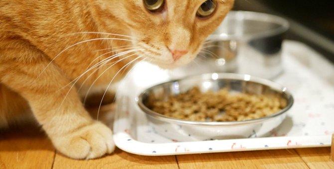 猫の療法食のおすすめ6選!選ぶ基準、与え方など