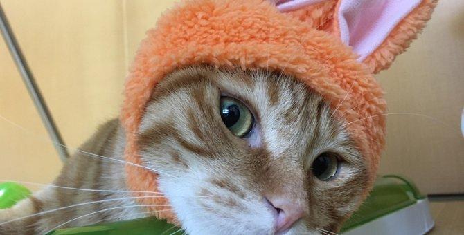 【うさ耳にゃんこ?!】話題の猫用コスプレガチャ「かわいい かわいい」シリーズが激熱!!