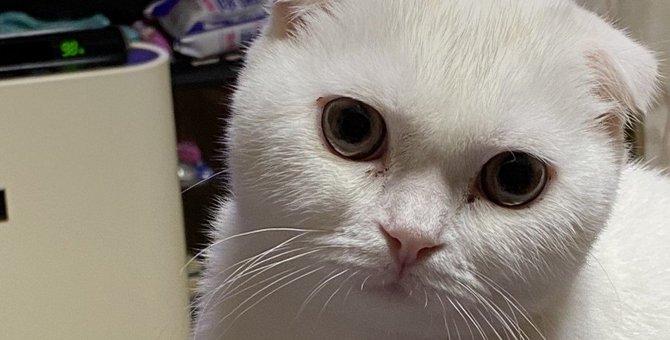 『ため息をつく猫』が考えていること5つ