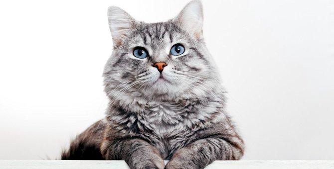 猫が『心を閉じたとき』に見せる仕草3つ