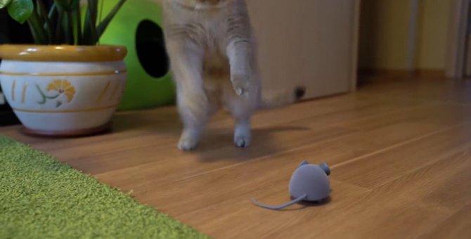 気になる!けどこわい…ネズミのオモチャから目が離せない猫ちゃん