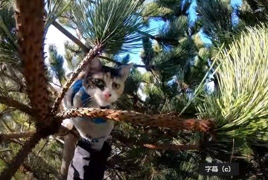 木の上で嵐を耐える子猫…響き渡る鳴き声に救助の声噴出!