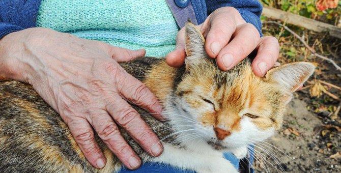 物言わぬ猫の命を守るために米国のボランティアが下した決断