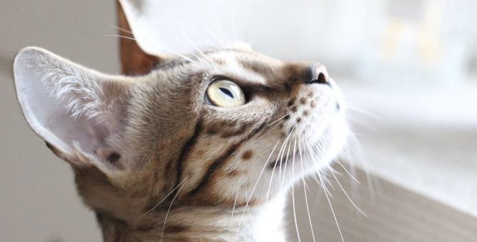 Laylaの12猫占い 11/11~11/17までのあなたと猫ちゃんの運勢