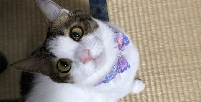 猫が『スキンシップ』を取りたがっているときの仕草や行動5つ