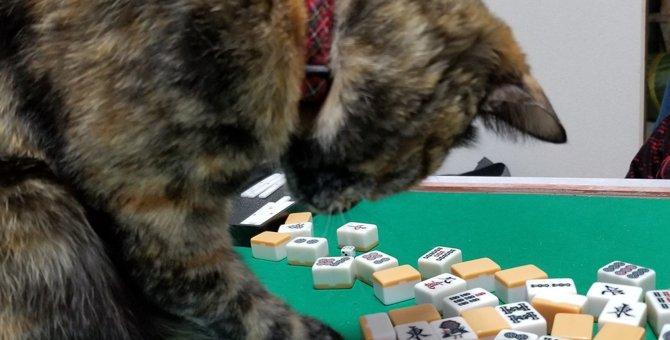 猫だけにドラ?「北」を好み麻雀牌を混ぜる猫に「ツミコミ?」の声も
