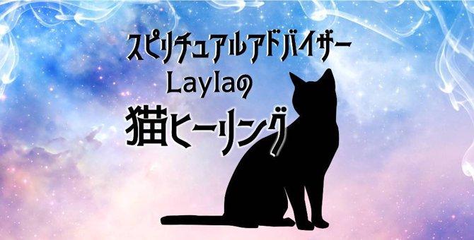 Laylaの猫占い  瞳が茶色の猫ちゃんは『不安な時』飼い主にできる事とは?