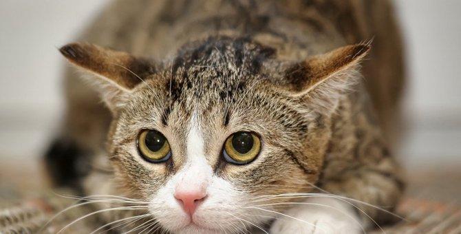 猫が『迷惑』に感じる飼い主のNG行為5選