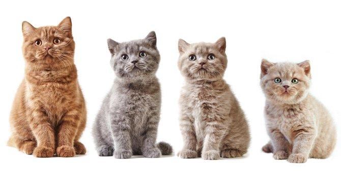猫の年齢の2つの見分け方