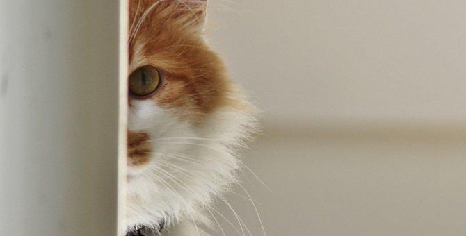猫が『一緒に遊ぼうよ』とアピールしている時のサイン5つ