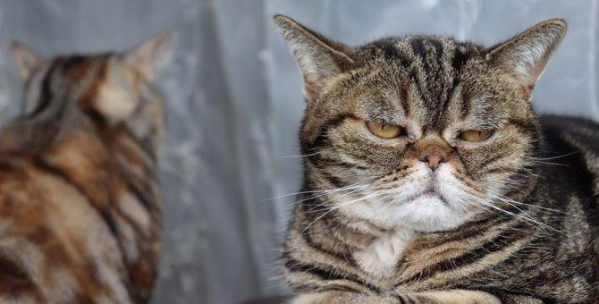 多頭飼いに向かない猫の特徴3つ