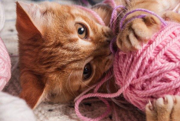 猫を毛糸で遊ばせる時に注意したい3つの事